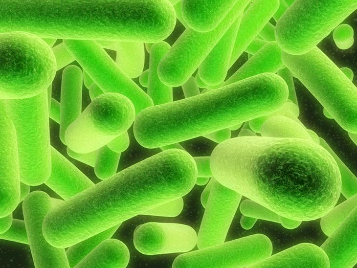 e coli under microscope - photo #40